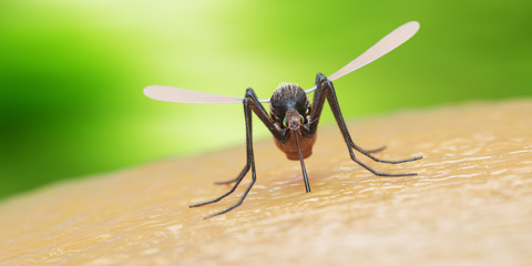Spoed Fotobehang Macrofotografie 3d rendered illustration of a mosquito on human skin