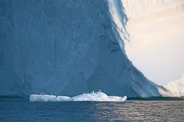 Birds perched on melting ice below iceberg Atlantic Ocean Greenland Fotoväggar