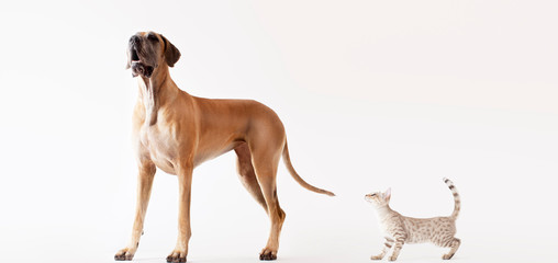 Cat sneaking up on howling dog