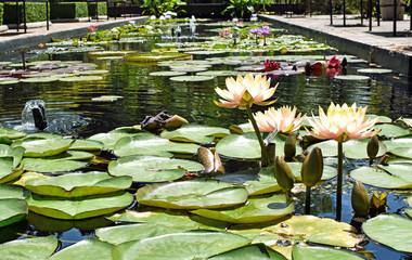 Stellenbosch University Botanical Garden, South Africa