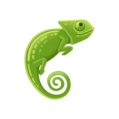Cute small green chameleon lizard cartoon animal design flat vector illustration isolated on white background