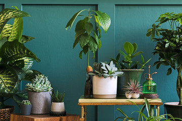 Foto auf Leinwand Blumen Stylish composition of home garden interior filled a lot of beautiful plants, cacti, succulents, air plant in different design pots. Green wall paneling. Template. Home gardening concept Home jungle.