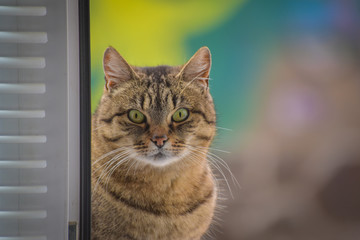 Portrait of a watching cat