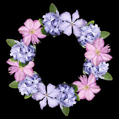 Fototapete - Beautiful floral circle of clematis and hyacinth. Isolated