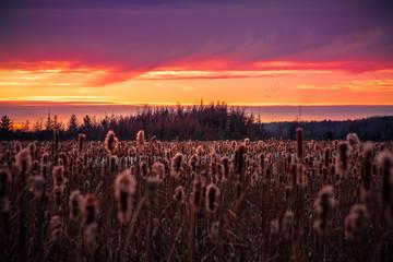 Poster Crimson sunset at Mer Bleu bog trail ottawa