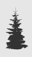Coniferous tree silhouette. Fir tree silhouette isolated on white background.