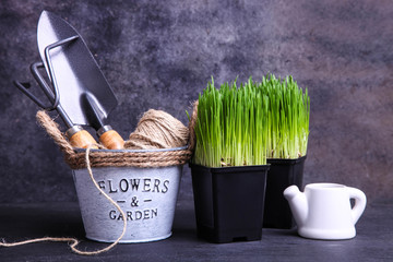 Sprouted wheat grass