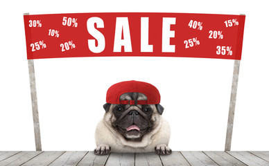 frolic smiling merchant pug puppy dog with hat and red promotional  banner sign with text sale % off, selling with discount, isolated on white background