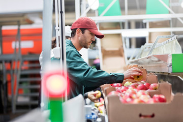Male worker inspecting apples in food processing plant