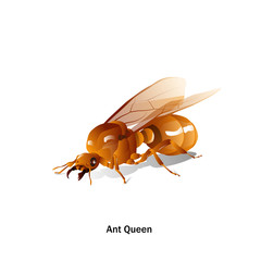 Ants Queen vector with wings in perspective, on a white background for artist or graphic design.