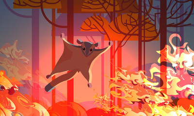 sugar glider escaping from fires in australia animals dying in wildfire bushfire natural disaster concept intense orange flames horizontal vector illustration