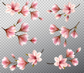 Big collection with beautiful magnolia branches on transparent background. Vector.