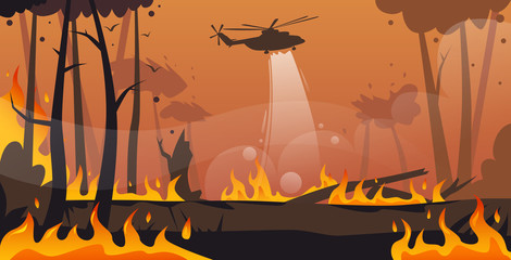 helicopter extinguishes dangerous wildfire in australia fighting bushfire dry woods burning trees firefighting natural disaster concept intense orange flames horizontal vector illustration