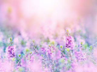 Poster Bloemen Abstract floral backdrop of purple flowers field with soft style.