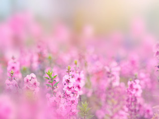 Wall Mural - Abstract floral backdrop of pink flowers field with soft style.