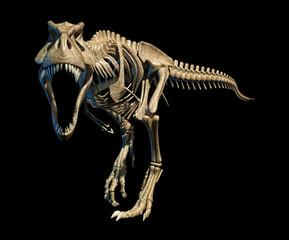 Tyrannosaurus rex skeleton, illustration