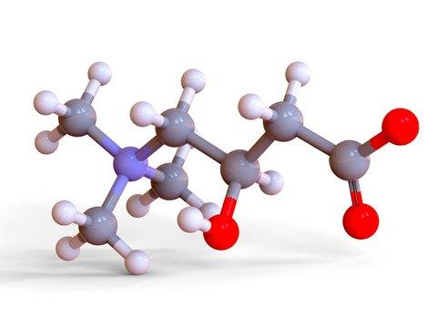 L-Carnitine food supplement molecule