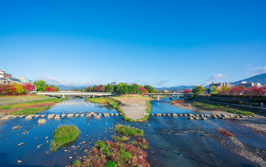京都 鴨川公園 秋