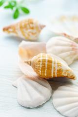 夏イメージ 貝殻