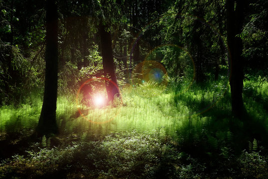 Deep forest with lush green plants enlightened by mysterious light and flares.