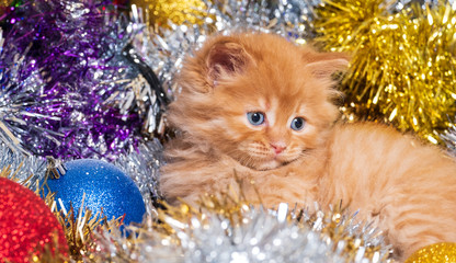 little kitten with blue eyes and christmas balls