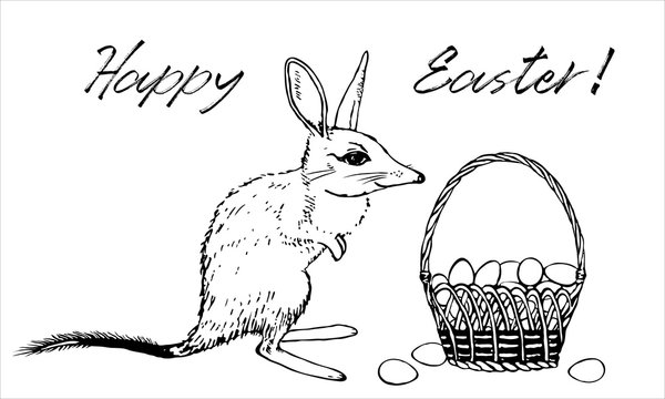 Bilby with Easter basket sketch. Hand drawn vector illustration, label or card. Minimal vector illustration isolated on white background. Happy Easter!