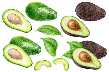 Avocado set watercolor isolated on white background