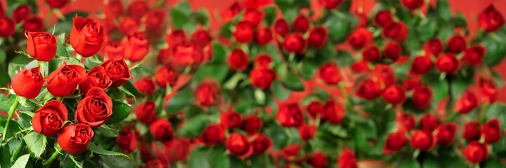 Red roses Valentine's Day banner, Spring