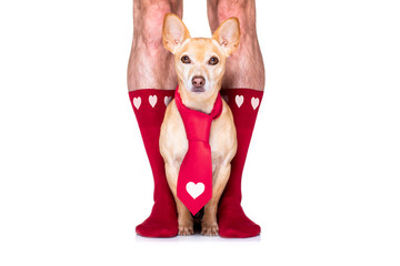 Foto op Plexiglas Crazy dog valentines wedding dog in love