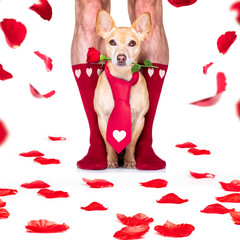 Foto auf Acrylglas Crazy dog valentines wedding dog in love