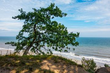 Morze Bałtyckie drzewo plaża