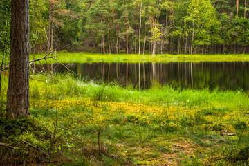 Las jezioro trawa
