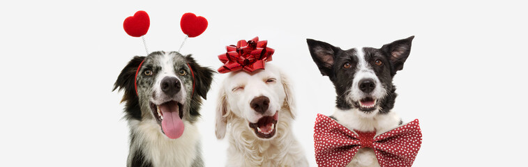 banner three dogs celebrating valentine's day with a red ribbon on head and a heart shape diadem...
