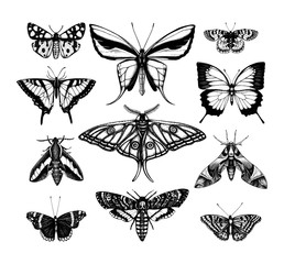Ingelijste posters Vlinders in Grunge Vector collection of high detailed insects sketches. Hand drawn butteries illustrations in vintage style. Entomological drawings set.