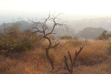Burnt tree, dryness