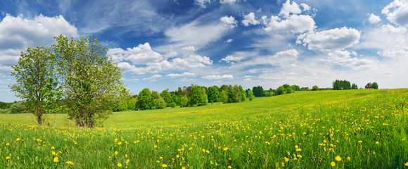 Wall Mural - Green field with white and yellow dandelions outdoors in nature in summer
