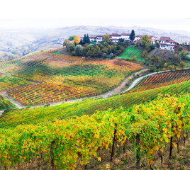beauty in nature - autumn countryside with rows of colorful vineyards in Piedmont, famous wine region of Italy