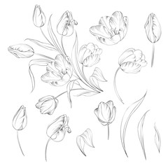 Hand drawn tulips collection in line style contour templates. Ink sketch elements of spring flowers for black and white design. Vector illustration.