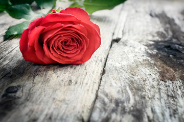 Red rose on wooden background, valentine's day, romance, thank you, celebration or anniversary