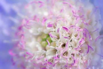 Abstract flower blossom macro