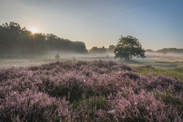 Germany, Hamburg, Landscape with heather at sunrise