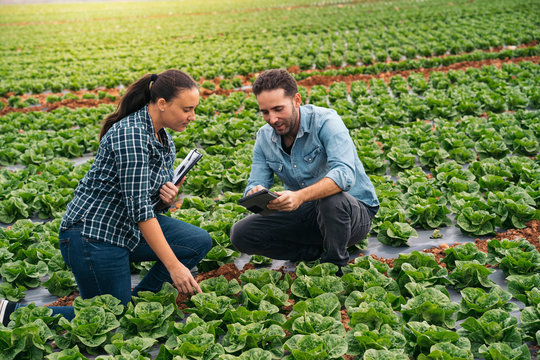 Man and woman with tablet and clipboard in lettuce field