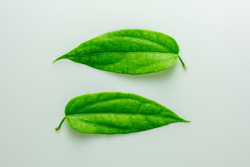 Fototapete - twins green leaves on white background.