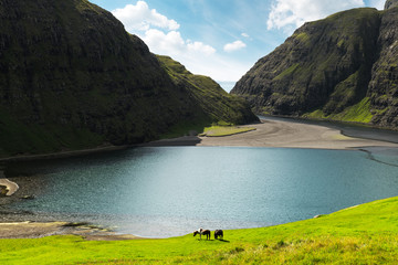 Amazing summer view on Pollurin Laguna in Saksun village. Beauty landscape with two horses on lush green meadow and high mountains. Streymoy island, Faroe Islands, Denmark.