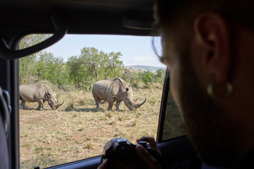 Man taking a picture of a rhinos out of the car window,  Hluhluwe-Imfolozi Park, South Africa