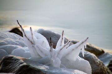 Foto op Plexiglas Zwaan Sweden's nature in the winter months