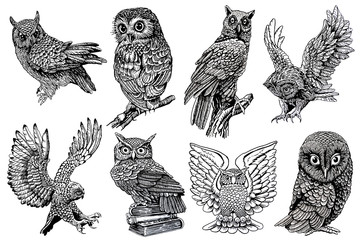 Wall Murals Owls cartoon Graphical sketch of owls isolated on white background,jpg illustration,night bird