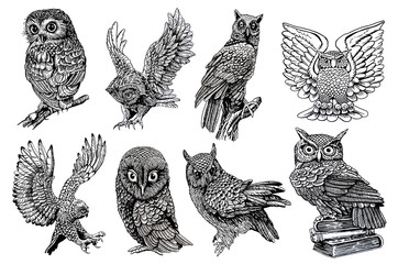 Graphical sketch of owls isolated on white background,jpg illustration,night bird