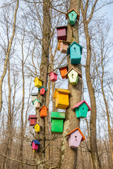 Colorful wooden beehives in forest