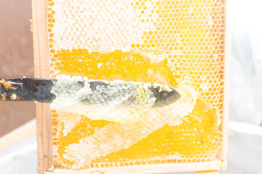 Beekeeper uncapping honeycomb with special beekeeping fork Raw honey Beekeeping concept.